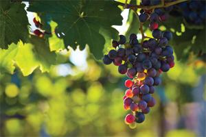 pHmetri per enologia, analisi di vini e mosti